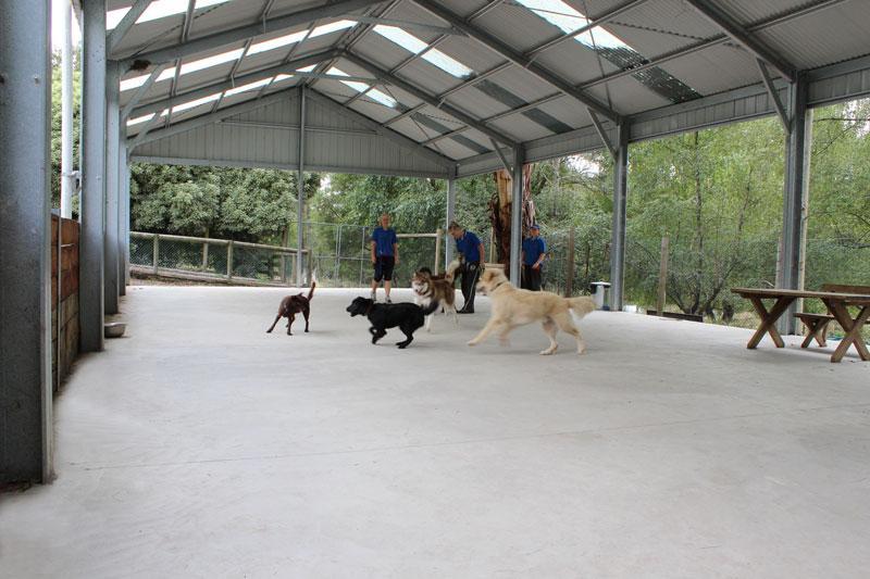 Training Facility Alpha Canine Professional