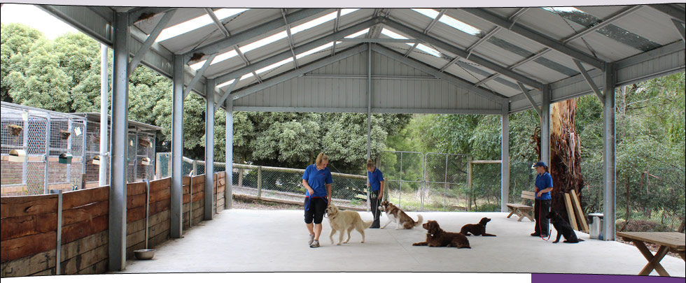 The Alpha Canine Group purpose-built outdoor training facility