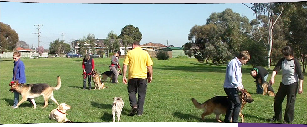 Lecture and workshop at the German Shepherd Club