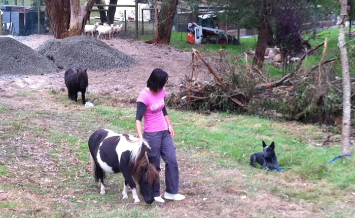 Kristin working a drop step away whilst patting one of the ponies as a distraction
